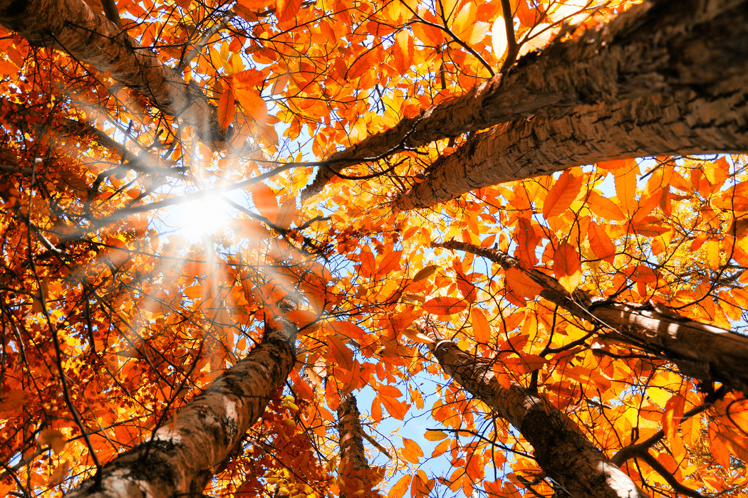 Blog Autumn traditions in France and Spain